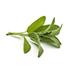 Sage Leaf Extract