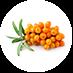 Sea Berry Oil